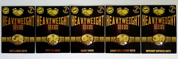Heavyweight Cannabis Seeds Promo!