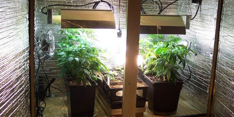 How To Grow Marijuana Indoors 5 Things You Ll Need