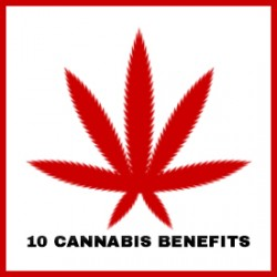 Top 10 Health Benefits of Cannabis
