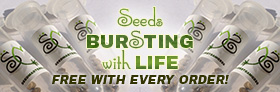 Free Cannabis Seeds With Every Order!