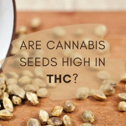 Are Cannabis Seeds High In THC?