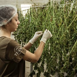 5 Best Practices To Follow For Storing Cannabis Seeds