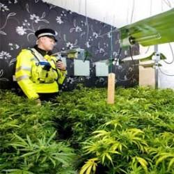 Cannabis Farm in Shopping Arcade!