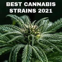 Best Cannabis Strains in 2021 - Indica vs Sativa vs Hybrid