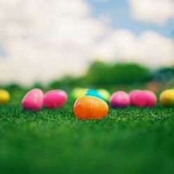 Easter Egg hunt ends with Cops Finding Cannabis