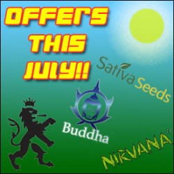 Special Offers This July On Cannabis Seeds!