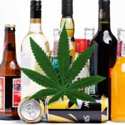Study finds alcohol is massively more deadly than Cannabis