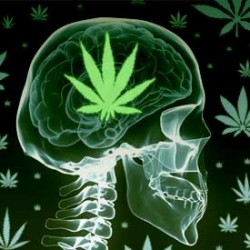 New study says Cannabis does not cause Depression and Anxiety!