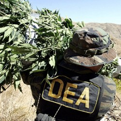 DEA announce Cannabis will remain on the Schedule I