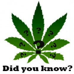 10 interesting Facts about Cannabis