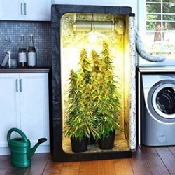 Top Tips for growing Marijuana Seeds Indoor