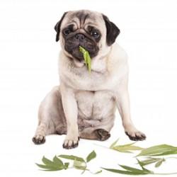 How CBD Benefits Pets
