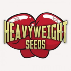 New Heavyweight Cannabis Seeds Promo Just For You!