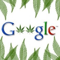 10 Most Googled Cannabis Questions