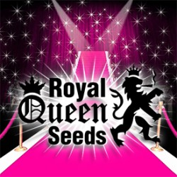 Get the red carpet to welcome royal queen cannabis seeds!