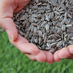 Seed Cycling for Hormone Balance - Benefits and How to Do It