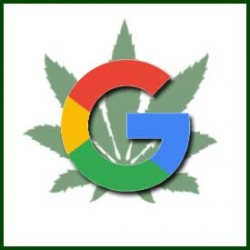 Google Might Be Considering the Cannabis Industry
