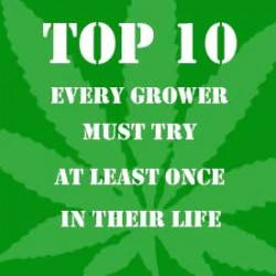 Our Top Ten that everyone should try once in their life
