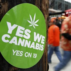 Florida to vote on Medical Cannabis in November