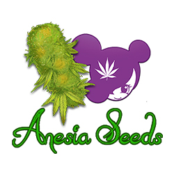 Anesia Cannabis Seeds