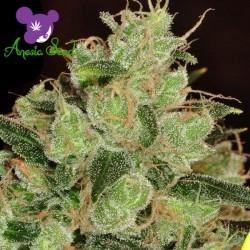 Banana Kush - Cannabis Seeds