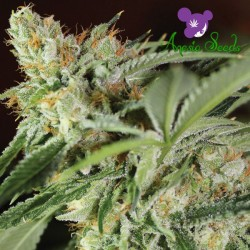 Ghost Train Haze #1 - Feminized Seeds