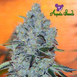 Mob Boss - Cannabis Seeds