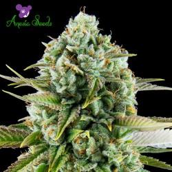 Pink Starburst - Cannabis Strain