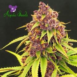 Purps OG - Cannabis Strain