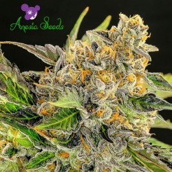 Strawberry Kush Feminized