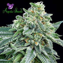 Strawberry Tree - Cannabis Seeds
