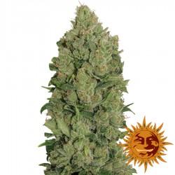 Auto NYC Diesel - Cannabis Seeds - Barney's Farm