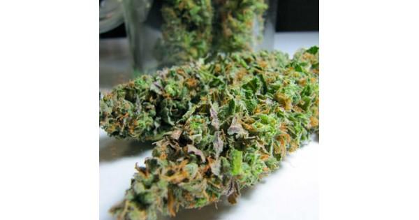 bc sweet island skunk marijuana seeds. Black Bedroom Furniture Sets. Home Design Ideas