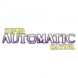 Super Automatic Sativa Big Buddha Seeds
