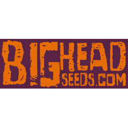 Big Head Seeds - Cannabis Seeds