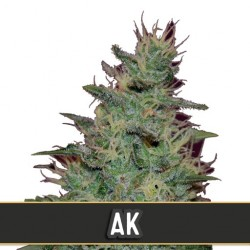 AK Automatic - Cannabis Seeds