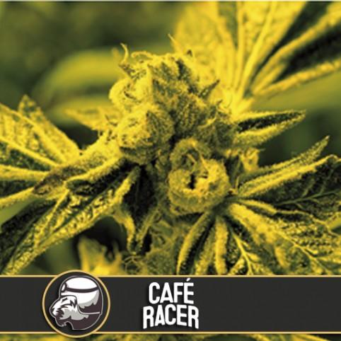 Café Racer - Cannabis Seeds