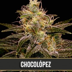 Chocolopez - Cannabis Seeds