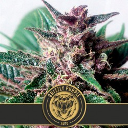 Green Crack - Cannabis Seeds