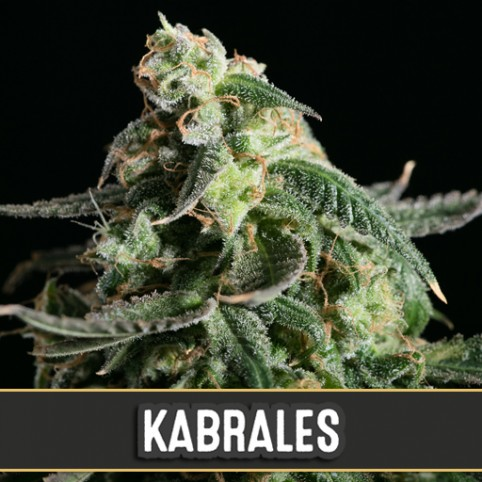Kabrales Automatic - Cannabis Seeds