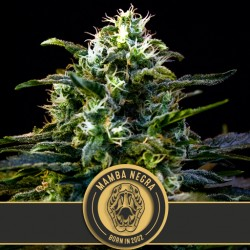 Mamba Negra - Cannabis Seeds