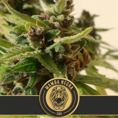 Mamba Negra Auto CBD - Cannabis Seeds