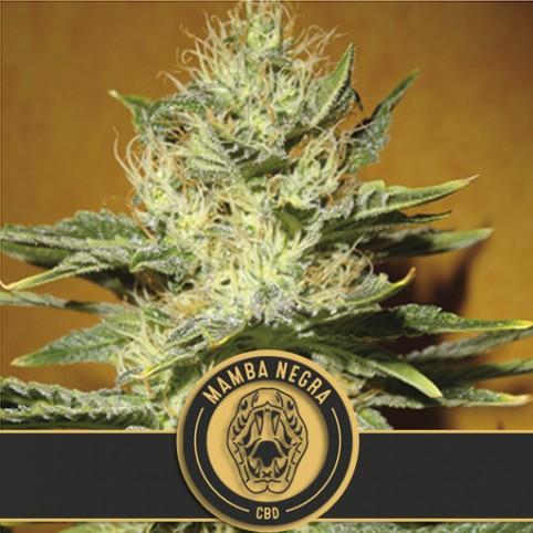 Mamba Negra CBD - Cannabis Seeds