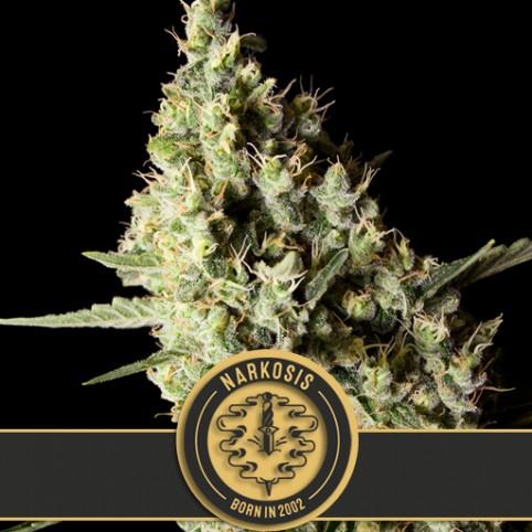 Narkosis - Cannabis Seeds