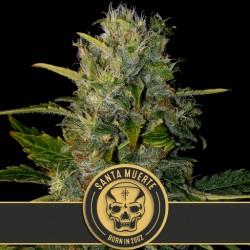 Santa Muerte - Cannabis Seeds
