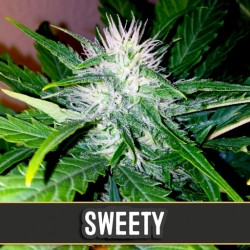 Sweety Automatic - Cannabis Seeds