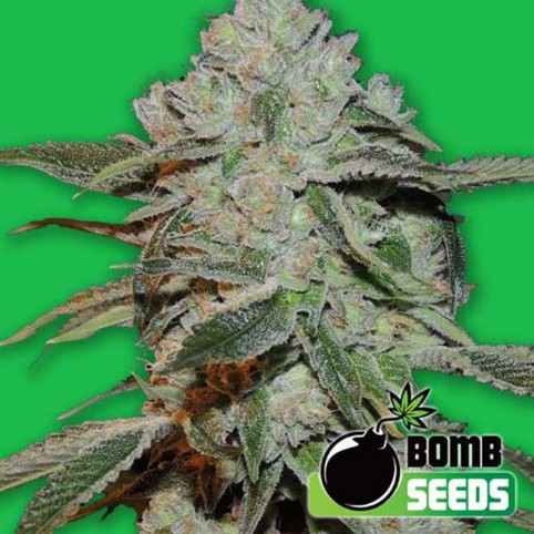 Atomic - Marijuana Seeds