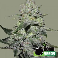 Gorilla Bomb - Cannabis Seeds