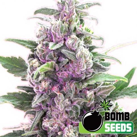 THC Bomb Auto Cannabis Seeds