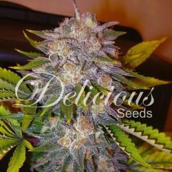 Caramelo F1 Rapid Cannabis Seeds